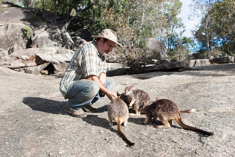 Andy Suarez feeding a Mareeba rock-wallaby (Petrogale mareeba) at Granite Gorge Nature Park