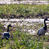 Unidentified birds, Yellow Water Billabong in Kakadu National Park
