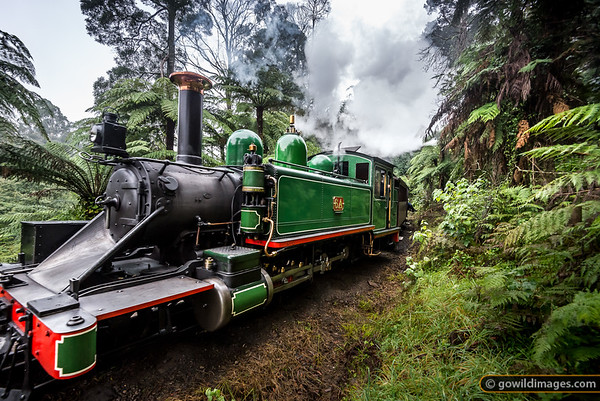 Puffing Billy in the Ferns