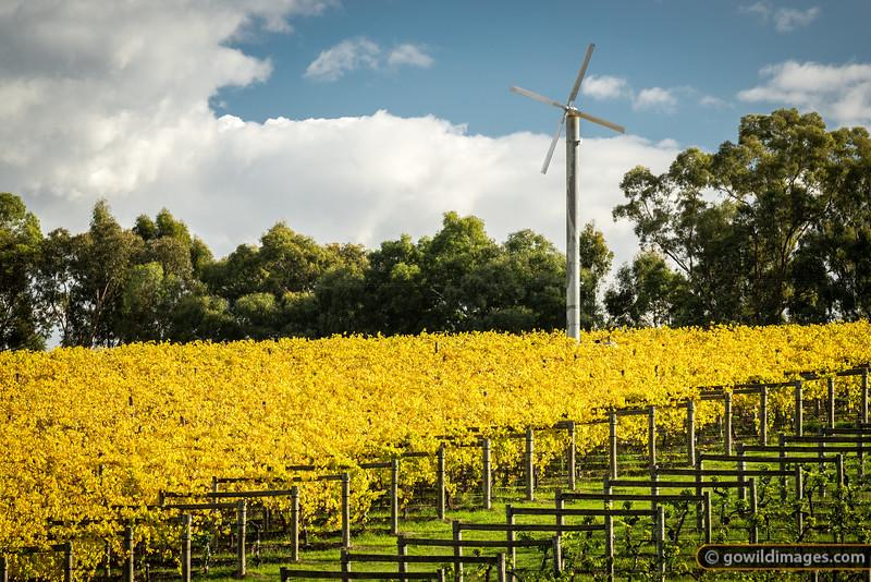 TarraWarra Estate winery, Yarra Glen