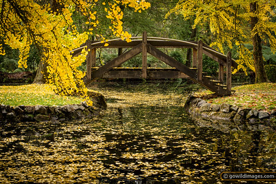 Ginkgo trees by the lake, Alfred Nicholas gardens. Very similar to 'Japanese Bridge' by Claude Monet!