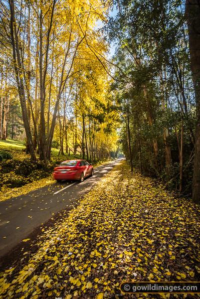Alton Autumn
