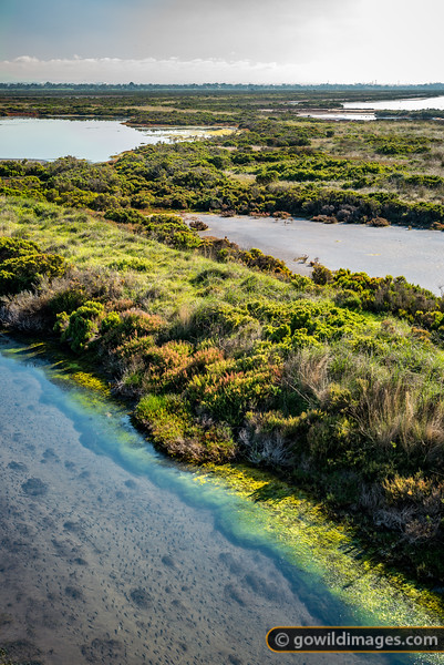 Cheetham Wetlands
