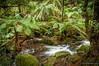 Rainforest gallery