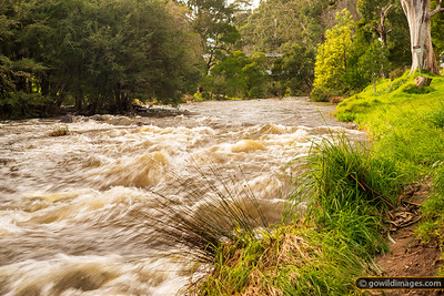 Yarra Flood