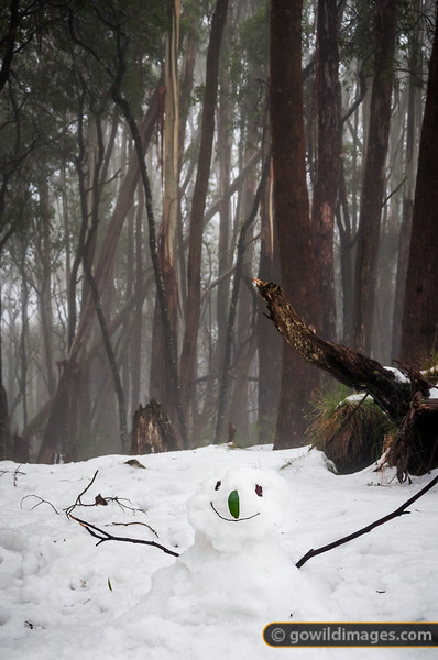 Happy snowman, Mt Donna Buang