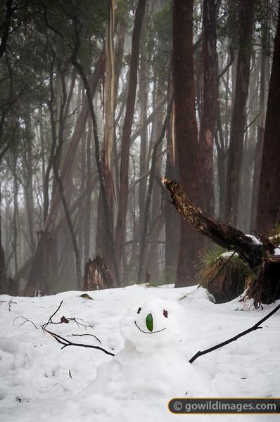 Happy snowman, Mt Donna Buang