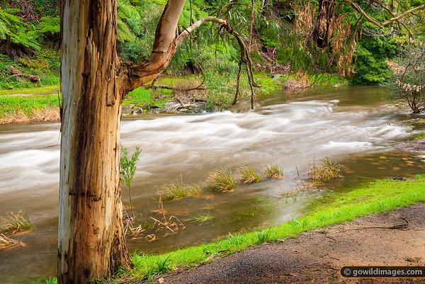 Upper Yarra