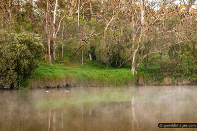 Yarra Bend Reflection