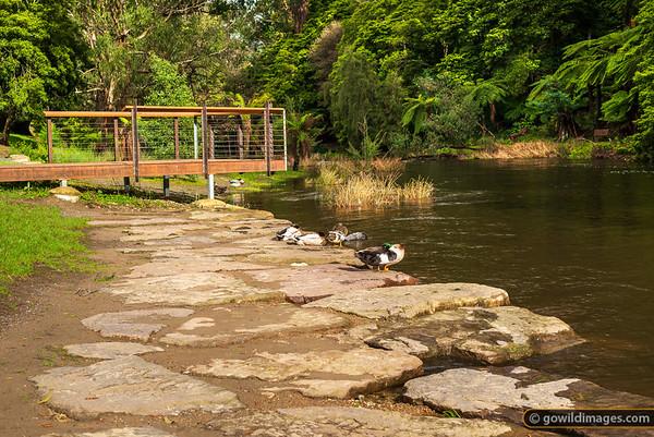 Warby Ducks