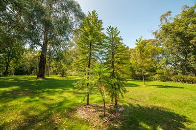 Wollemi Pine Gardens