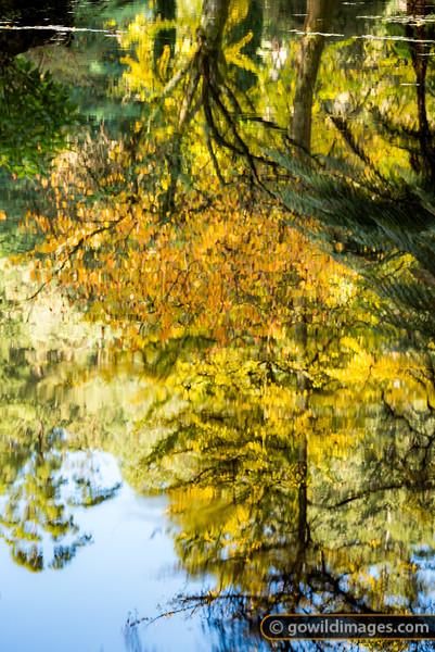 Yellow Mirror