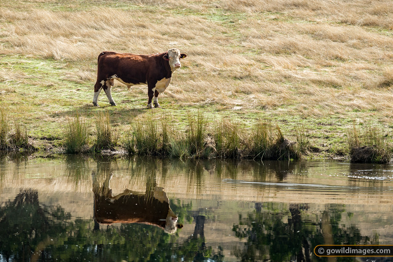 Hereford Reflections