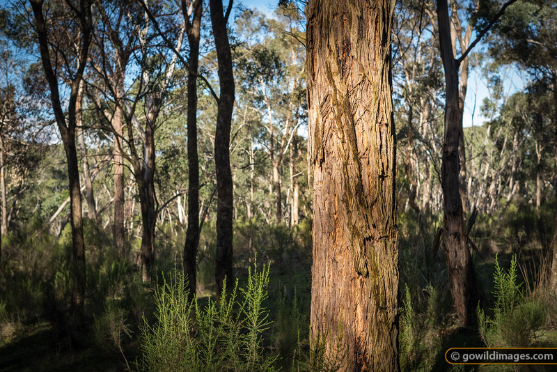Typical bush in the lower areas of Churchill NP and neighbouring Lysterfield Park