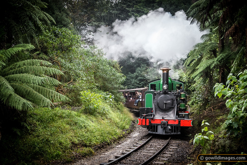 Puffing Billy in the Forest