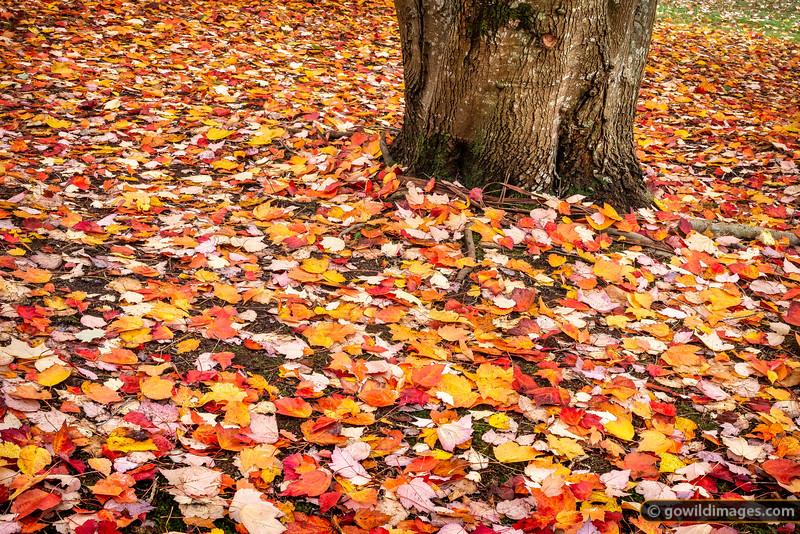 Leaf Glitter