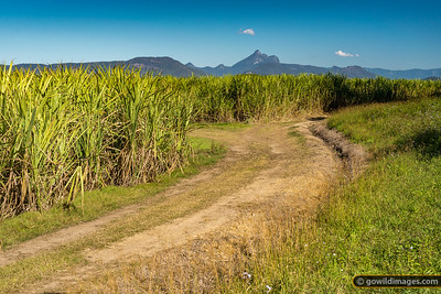 Mt Warning Sugar