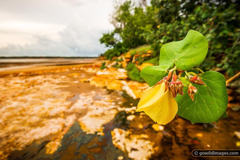 Tropical plants near East Point, Darwin, NT