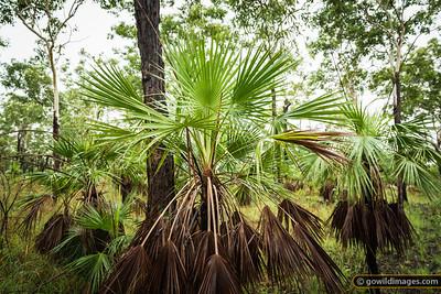 Tropical forrest, Litchfield NP, NT