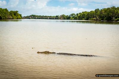 Patient croc, Adelaide River. Behind is the Arnhem Highway bridge, NT