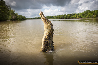 Jumping crocs, Adelaide River, NT