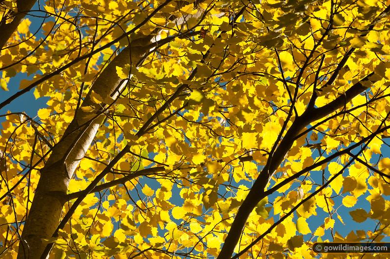 Autumn colours, Mt Macedon