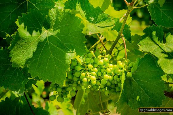 Kiewa Wines