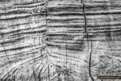 Tree Wrinkles