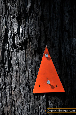 Walking track marker on a tree burnt by the Black Saturday bushfires, Cathedral ranges.