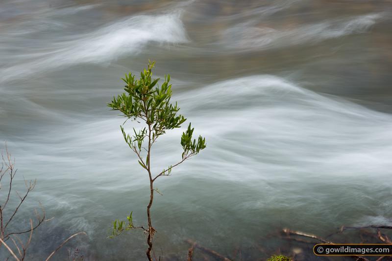 The Howqua, Victoria's fastest flowing river, near Sheepyard Flat