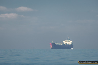 Port Phillip Shipping