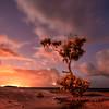 Memories of the Lone Tree