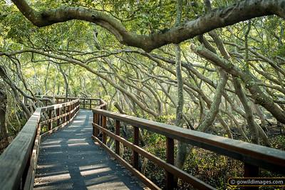 Wynnum mangrove walk