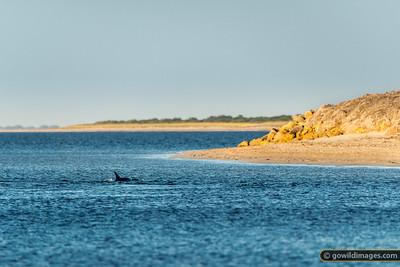 Dolphin Feed