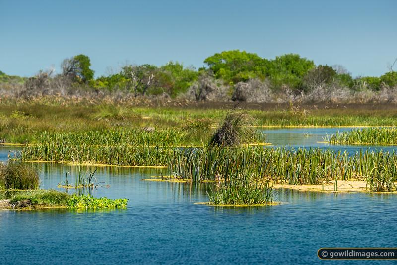 Piccaninnie Wetlands