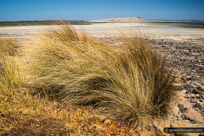 Coastal grasses near Tanketon, with Tortoise Head behind, French Island NP