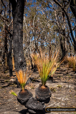 Grass Tree Recovery