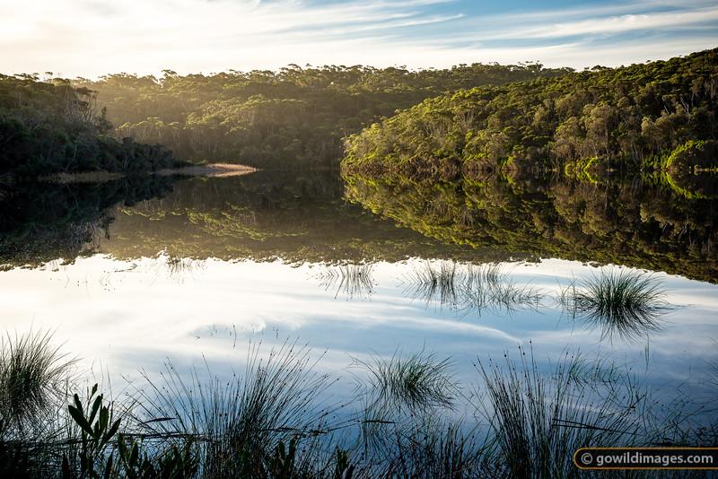 Thurra River Reflections
