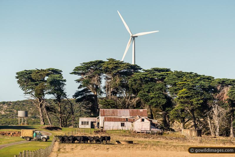 Farming Wind