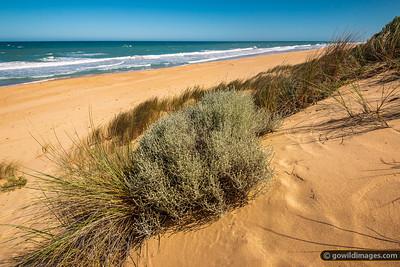 Ninety Mile Dunes