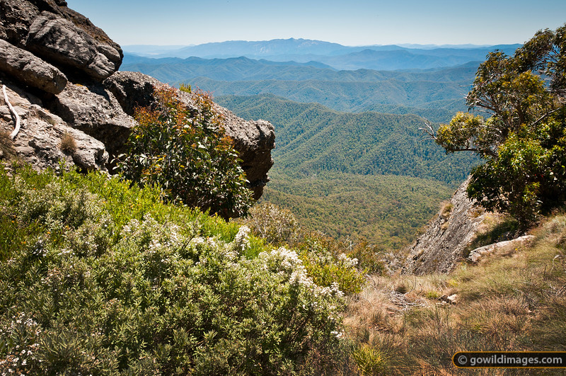 Gully between Mt Cobbler summits, looking North to Mt Buffalo