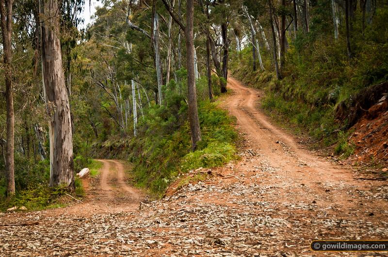 Switchback on Black Mountain track, Burrowa-Pine NP