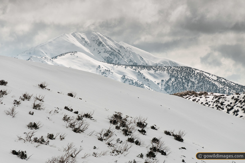 Looking across The Razorback to Mt Feathertop. A lone hiker ascends the left ridge.