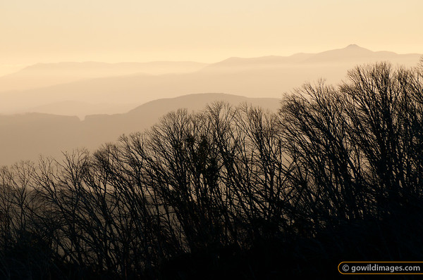 Sunrise looking east to Mt Bogong (left) and Mt Feathertop (right), from Macalister Springs