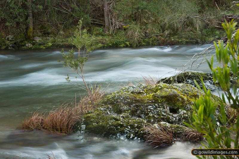 Howqua River, near Fry's Hut
