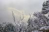 First Snows