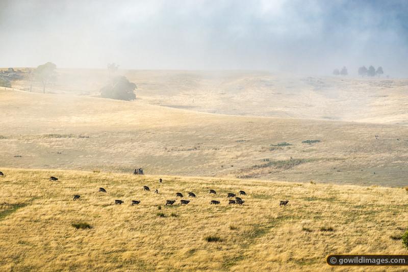 Mutton in the Mist