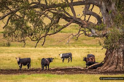 Bovine Bush Scene
