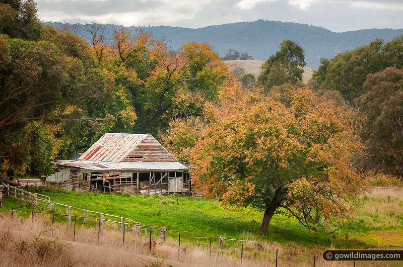 Abandoned farm hut near Yea