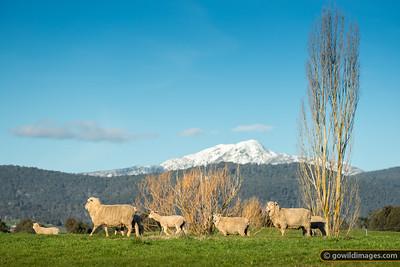 Alpine Vewes